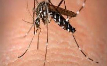 anti malaria mosquitos