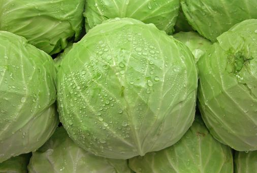 Cabbages Essential To Treat Diabetes Amp Ensure Blood