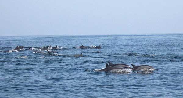 dolphins balochistan