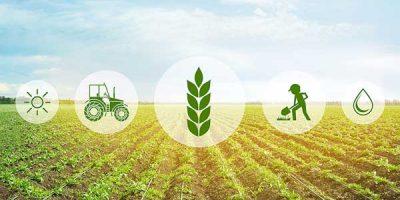 crops in field